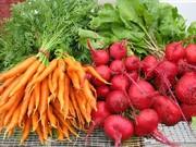 Морковь,  cвекла,  лук,  картофель. Доставка по Московскому и Фрунзенскому районам,  доносим до квартиры.