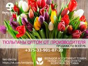 Тюльпаны оптом.  Гибкая система скидок.