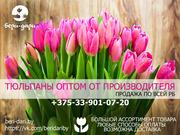 Тюльпаны оптом от производителя. Низкие цены.