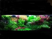Удобрения(микро,  макро,  калий,  железо) для аквариумных растений.///