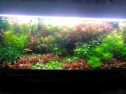 Удобрения(микро,  макро,  калий,  железо) для аквариумных растений./////