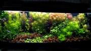 Удобрения(микро,  макро,  калий,  железо) для аквариумных растений.//////