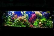 Удобрения(микро,  макро,  калий,  железо) для аквариумных растений.//=