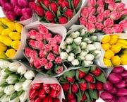 Голландские тюльпаны,  оптовая реализация.