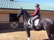 Фризской Мерин лошадь
