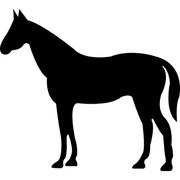 Куплю жеребенка коня кобылу