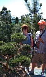 Приведем в порядок посадки хвойных и лиственных растений