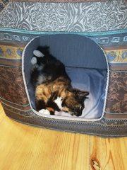 Котятам срочно нужен новый дом!